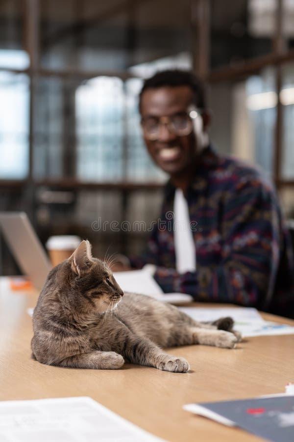 Sentiment de chat comme un patron s'étendant sur une table d'ordinateur image stock