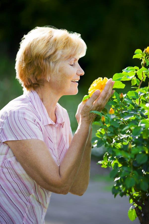 Sentimentalismo. Senhora idosa madura Smelling Yellow Flower foto de stock royalty free