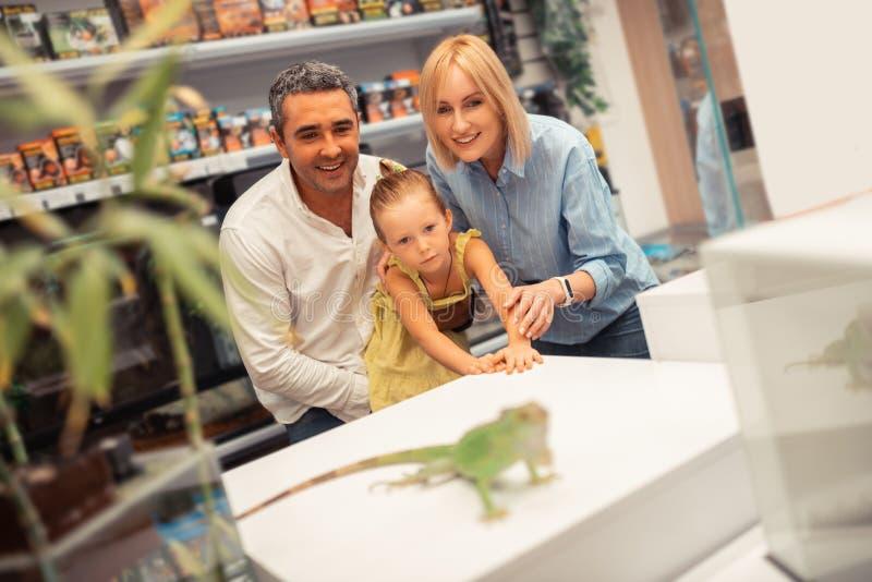 Sentimento louro da filha excitado ao olhar a iguana com pais foto de stock