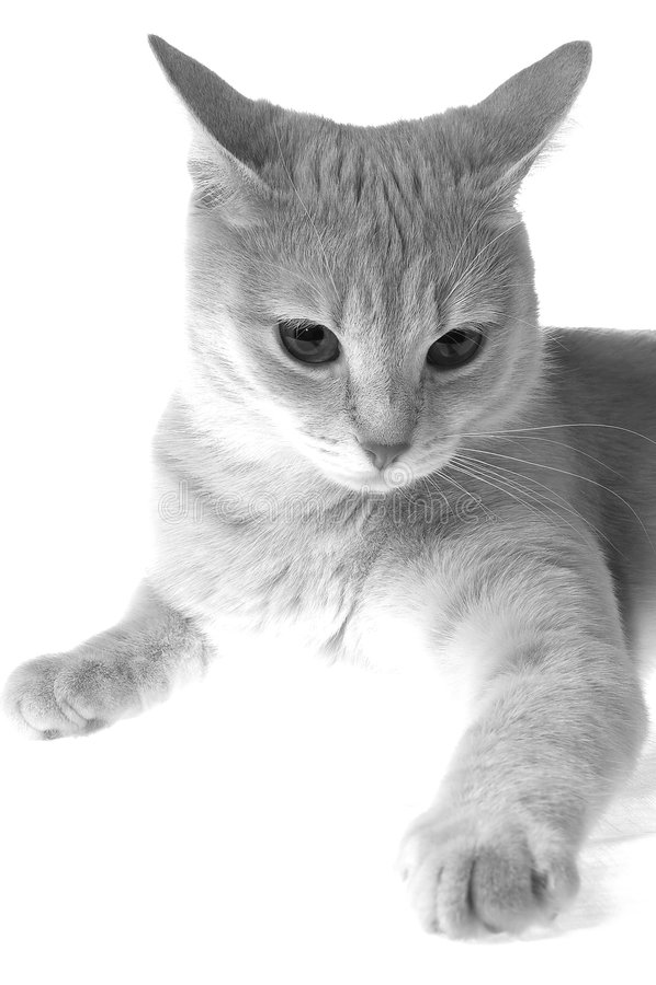 Sentimentos dos gatos fotografia de stock royalty free