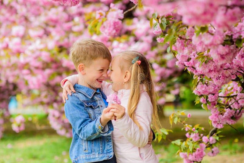 Sentimentos macios do amor Acople crian?as em flores do fundo da ?rvore de sakura A menina aprecia flores da mola Dando toda imagens de stock royalty free