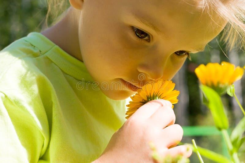 sentire l'odore dei fiori immagini stock