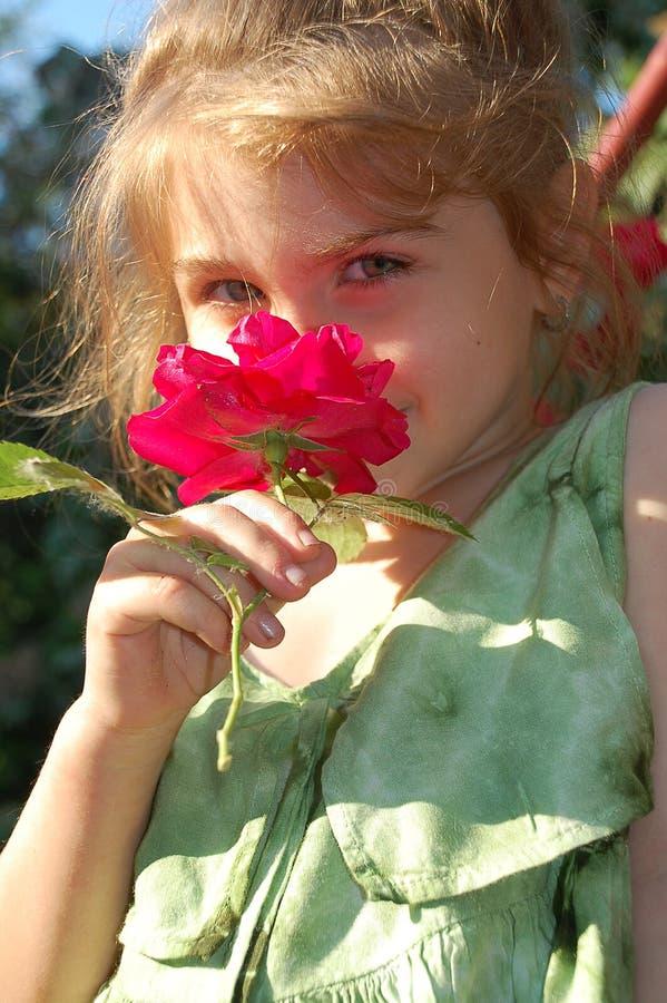 Sentire l'odore di una rosa immagini stock