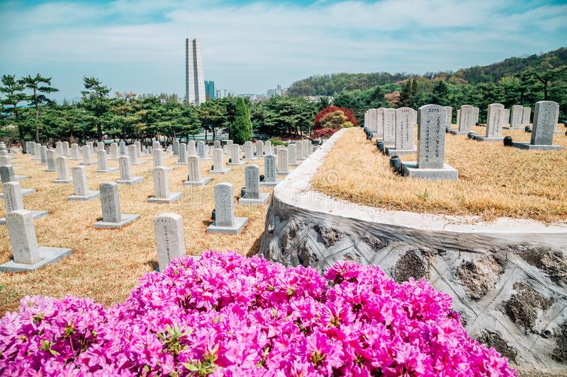 Tombstones at spring in Seoul National Cemetery, Korea royalty free stock image