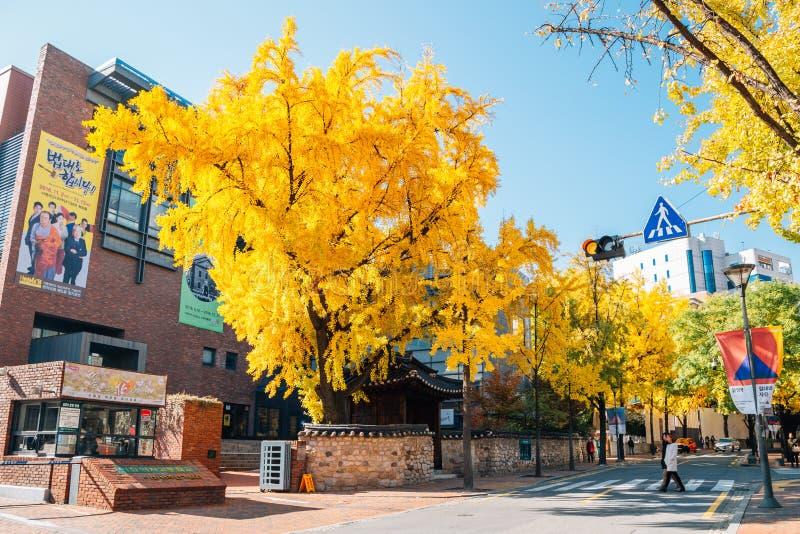 Ewha Girls` High School with autumn ginkgo trees at Deoksugung stonewall walkway in Seoul, Korea stock photography