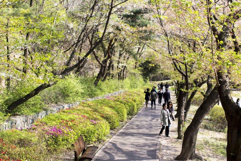 Seoul, parque ideal/Coreia - 16 de abril de 2018 Povos no parque da mola imagens de stock royalty free