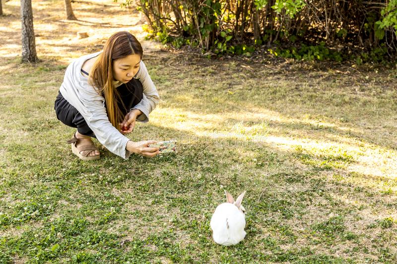 Seoul, South Korea - June 4, 2017: Young korean woman is taking mobile photo of rabbit in the park on Seonyudo island in Seoul.  stock images