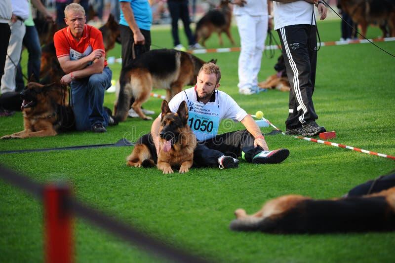 SEP 07, 2014 Nurnberg Biggest german shepherd dog show in German. Y. Participants having rest before competition stock photo