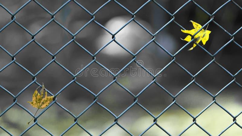 Separacyjny pojęcie wizerunek liście na ogrodzeniu obrazy stock