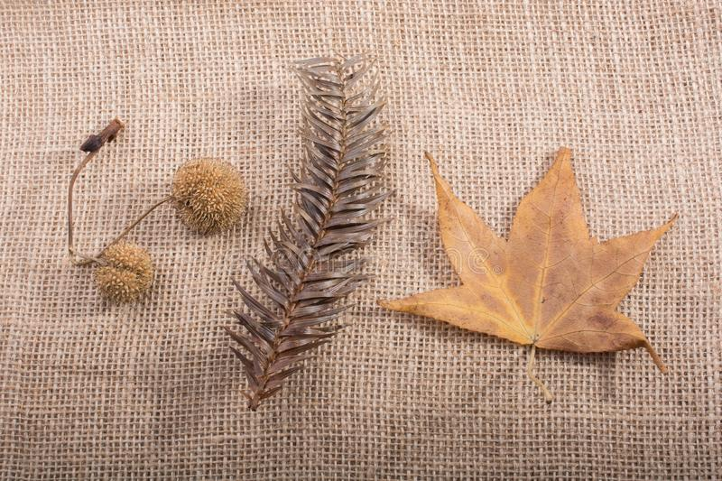 Separate dry leaf, pod and cone in view royalty free stock images