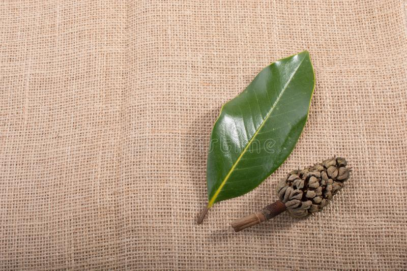 Separate dry leaf, pod and cone in view stock photo
