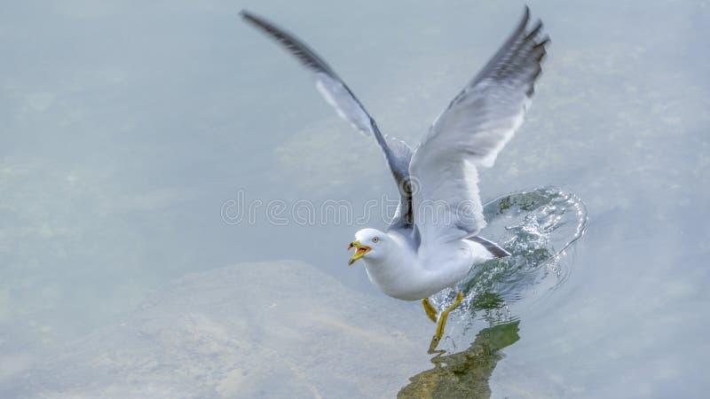Separe sus alas y foto de archivo