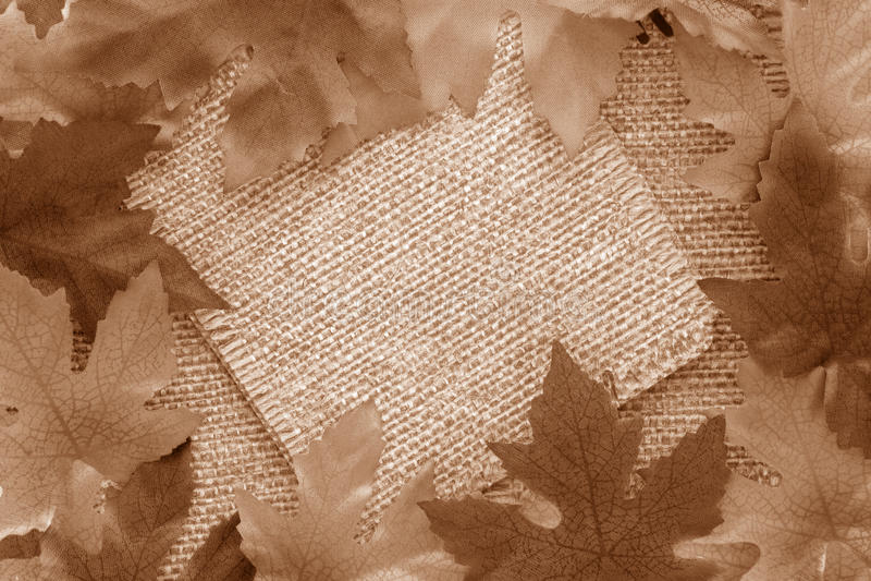 sepia листьев предпосылки стоковая фотография