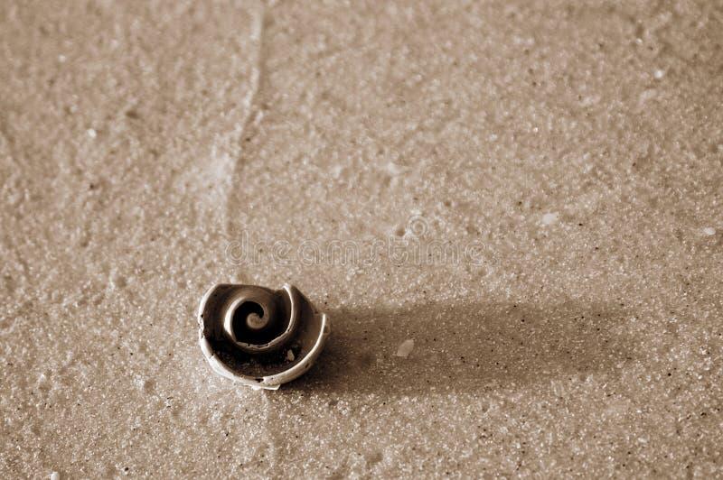 Sepia спиральной раковины на текстурированном песке стоковая фотография rf