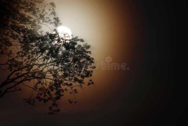 Sepia maanlicht stock foto