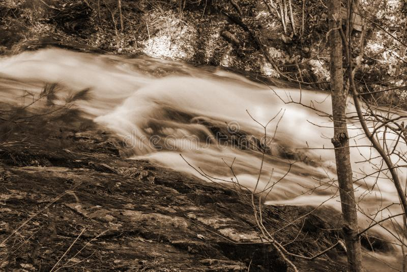 Sepia Tone Image de um córrego selvagem da truta da montanha imagens de stock royalty free