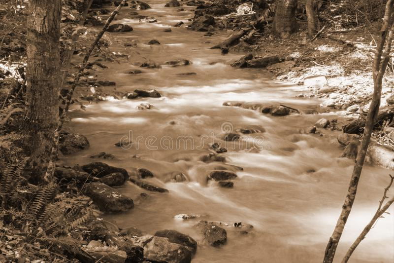Sepia Tone Image of a Wild Mountain Trout Stream. A sepia tone image of a wild mountain trout stream located in the Jefferson Nation Forest, Botetourt County stock images