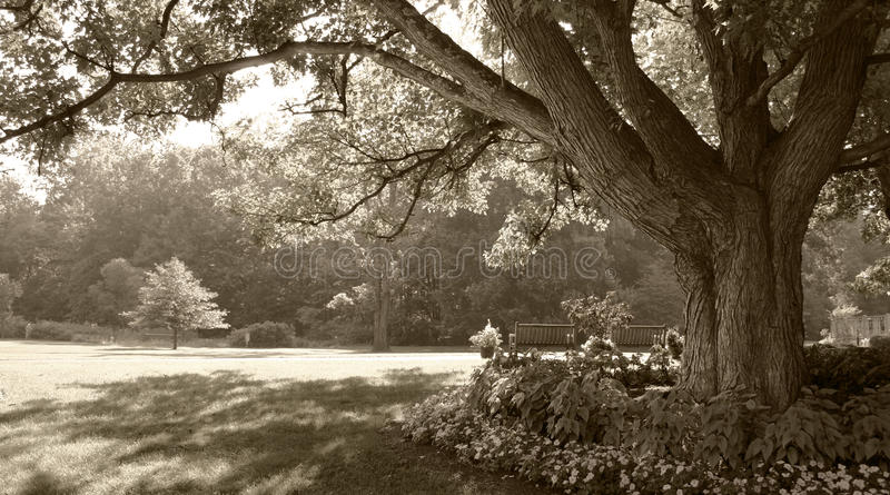 Download Sepia-toned Park Scene Royalty Free Stock Images - Image: 10676499