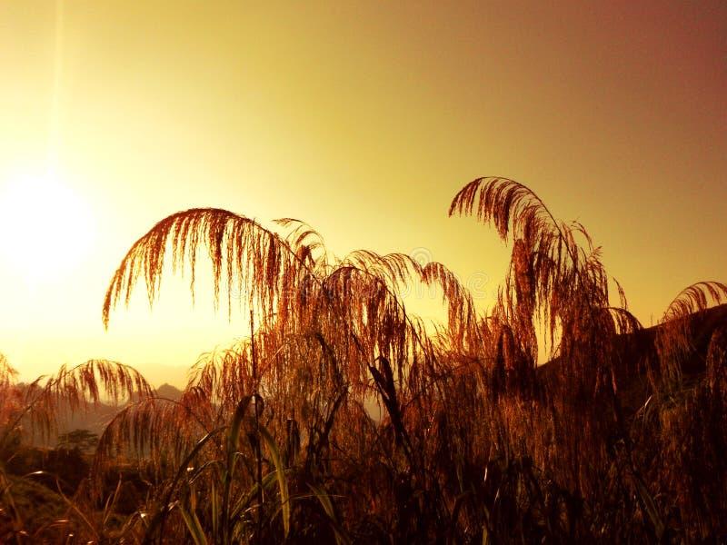 Sepia van Zonsopgang in de ochtend stock afbeeldingen