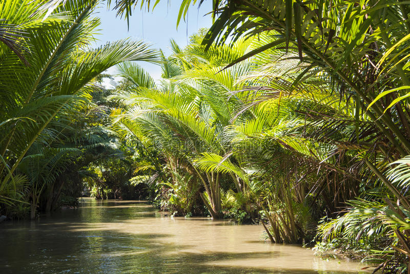 Sepik河,新几内亚 库存图片