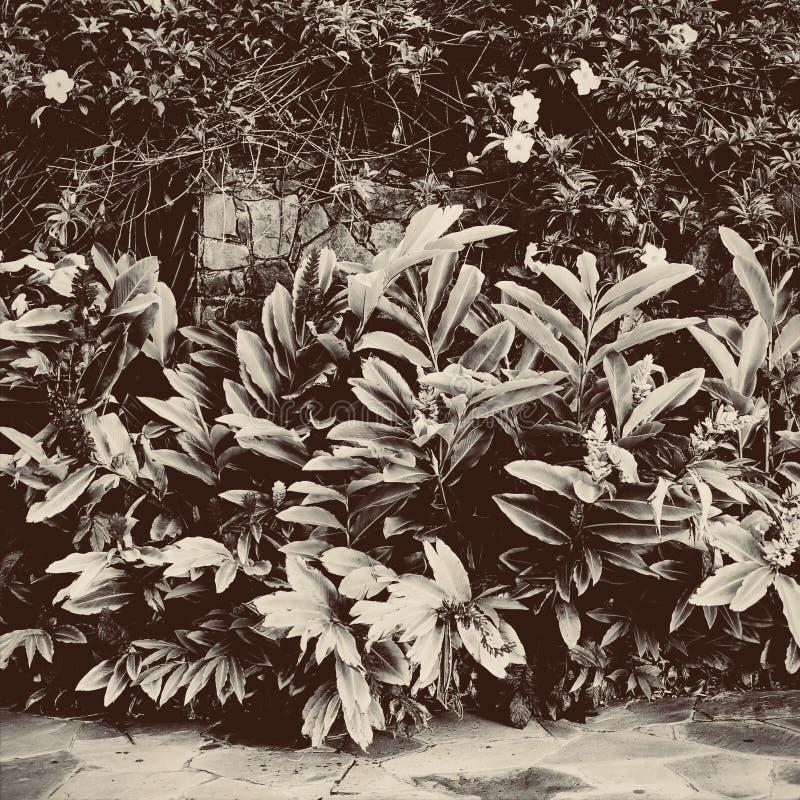 Sepiowi kolorów liście zdjęcie stock