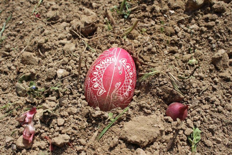 Seppellendo il vecchio uovo di Pasqua nel primo solco della terra, campo immagini stock