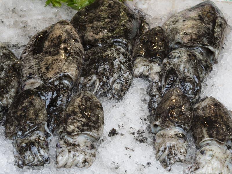 Seppia comune con inchiostro nero su ghiaccio al mercato ittico fotografia stock libera da diritti
