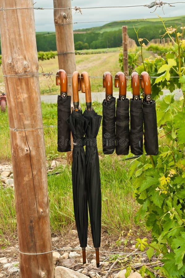 Sept parapluies de pluie dans un vignoble de raisin dans le sud-ouest, Espagne photo stock