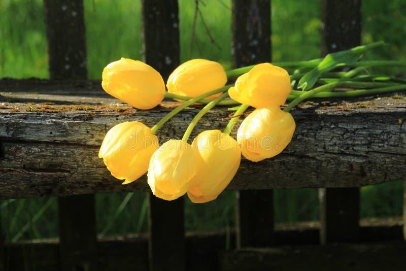 Sept tulipes jaunes Bouquet des tulipes image libre de droits