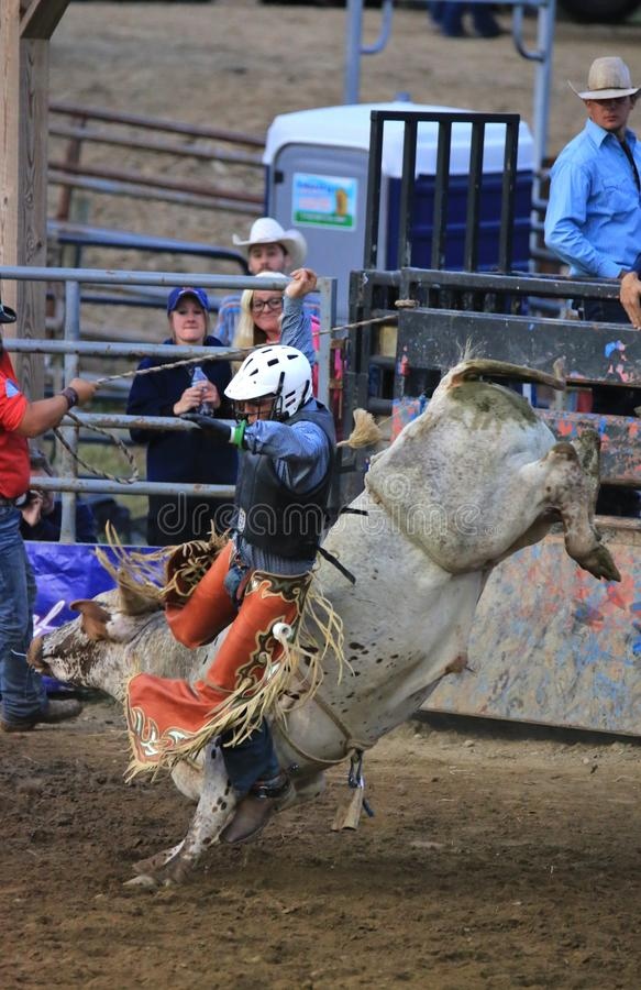Extreme Bull Riding at rodeo stock photo