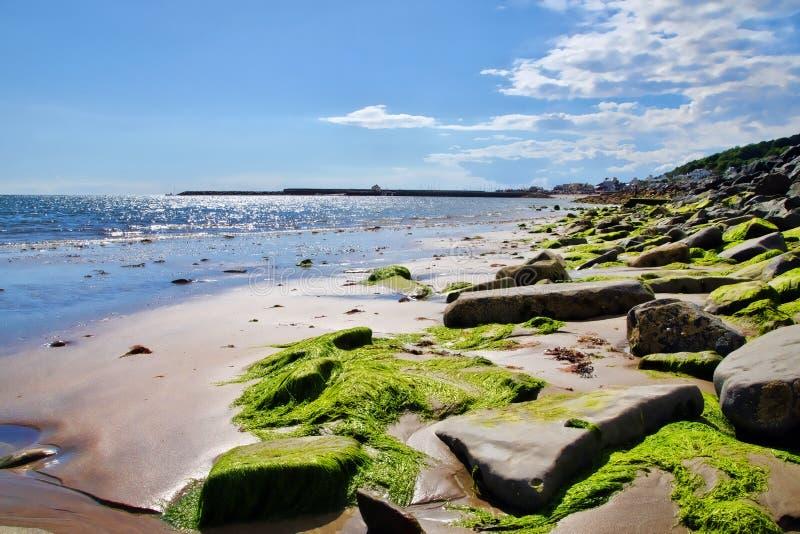 September eftermiddag ~ Lyme Regis arkivfoto