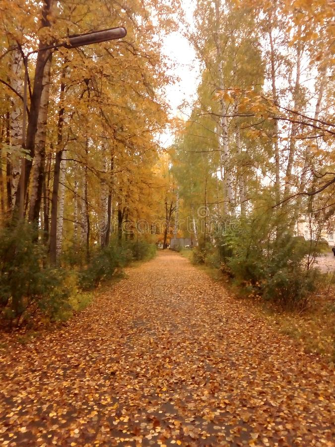 September. Gold September in the Urals royalty free stock photography