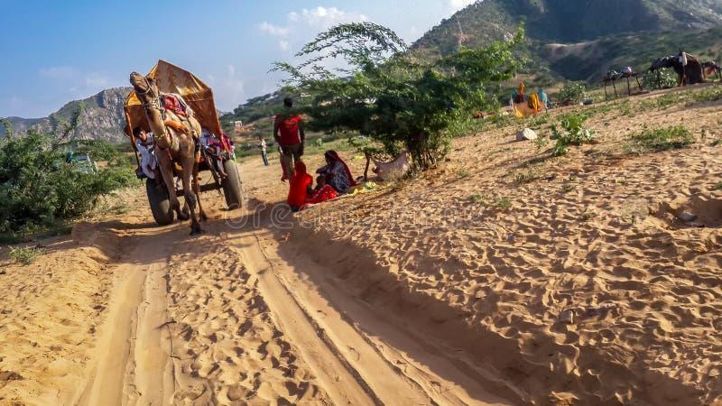 September 2015 pushkar Kamelsafari in Thar-Wüste, Rajasthan, Indien September 2015 stockbilder