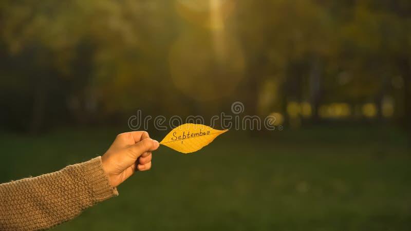 September som är skriftligt på höstbladet, hand som rymmer handstilar, guld- nedgångsäsong fotografering för bildbyråer