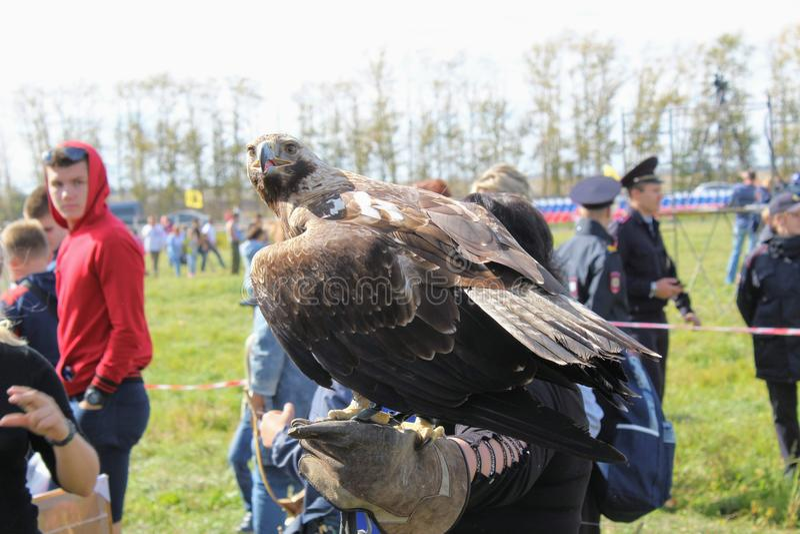 September, 16 2017, Tula, Russia - Historical Festival `Kulikovo Field`: eagle sitting on falconry glove. stock image