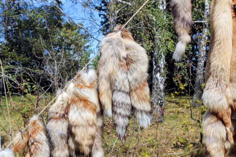 September, 16 2017, Tula, Russia - The International Military and Historical Festival `Kulikovo Field`: fur pelts. Hanging on a rope royalty free stock photography