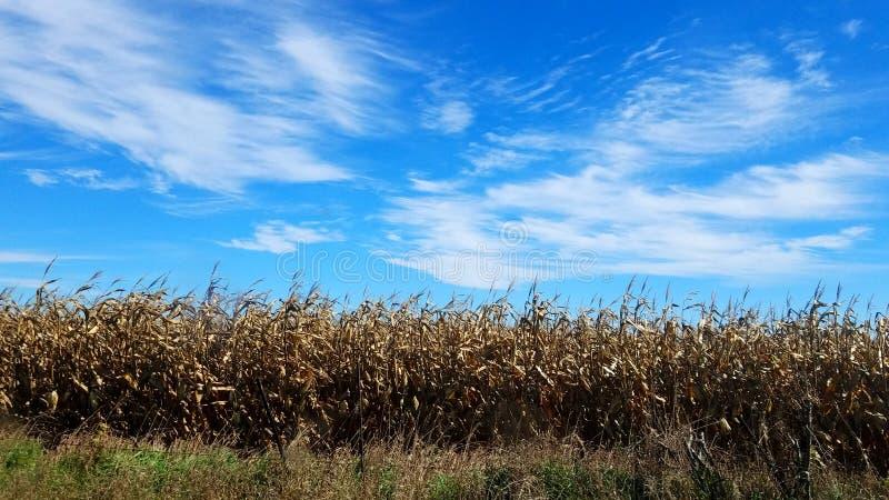 September-Wind stock foto's