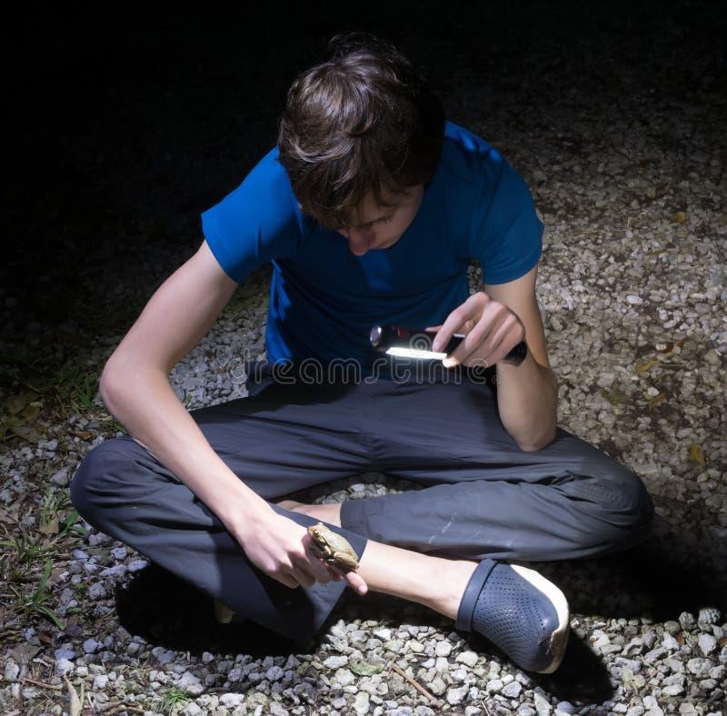 Septentrionalis Kubaner Treefrog Osteopilus Der Junge glänzt eine Taschenlampe und Blicke am Frosch, der auf seiner Hand sitzt na stockfotos