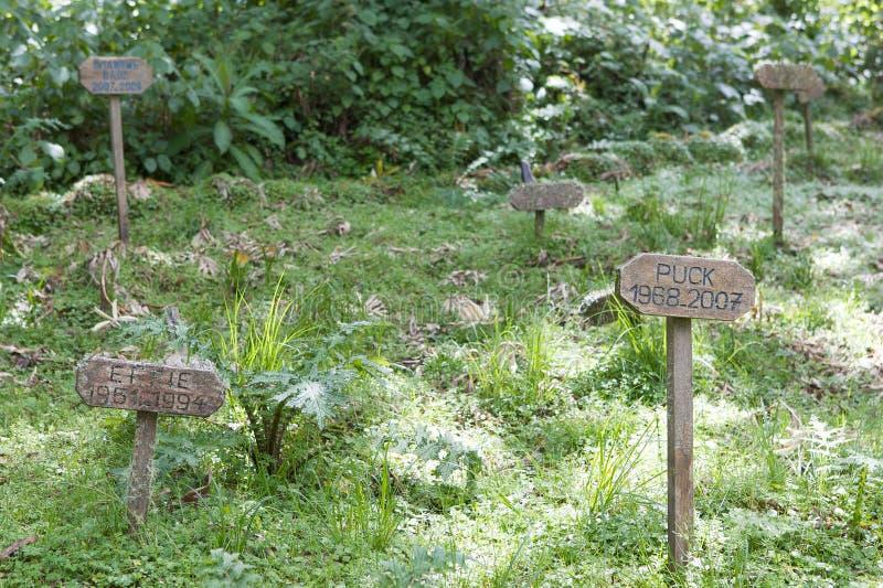 Sepulturas dos gorila do centro de pesquisa de Karisoke fotos de stock royalty free