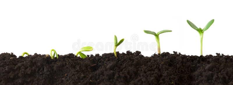 Seqüência da planta fotografia de stock royalty free