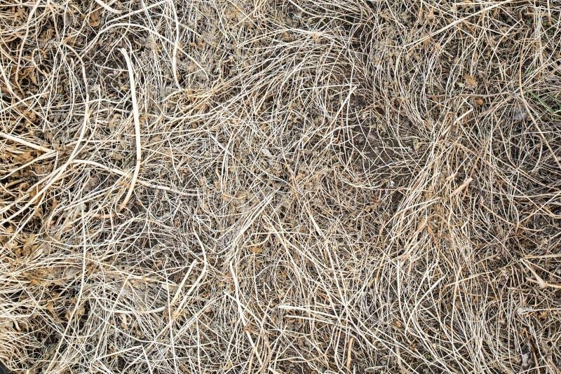 Seq?ese, el a?o pasado hierba del ` s Vieja textura del fondo de la paja A trav?s de la hierba putrefacta vieja rompe la hierba j fotos de archivo