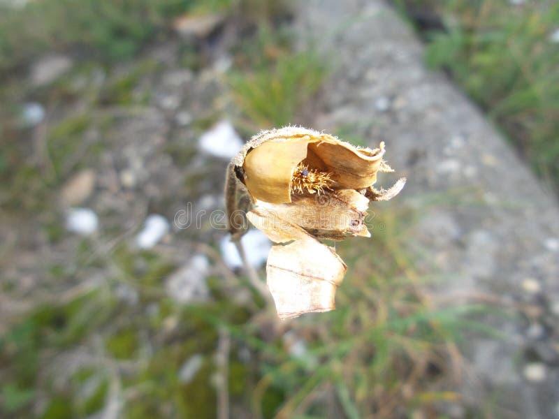 Sequía del verano foto de archivo libre de regalías