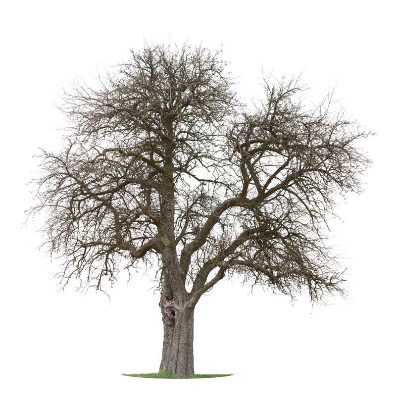 Seque a árvore de Apple fotos de stock