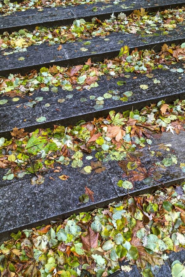 Seque as folhas amarelas caídas em etapas de pedra molhadas fotos de stock