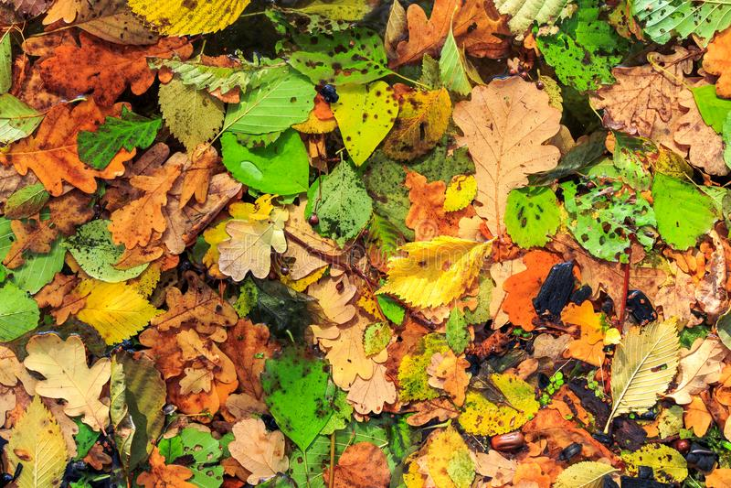 Seque as folhas caídas no outono De volta à escola Após a chuva imagens de stock royalty free