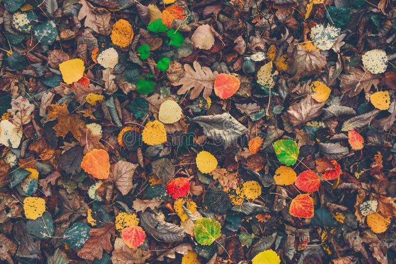 Seque as folhas coloridas caídas na terra Autumn Time Mudança das estações De volta à escola Após a chuva na floresta foto de stock royalty free