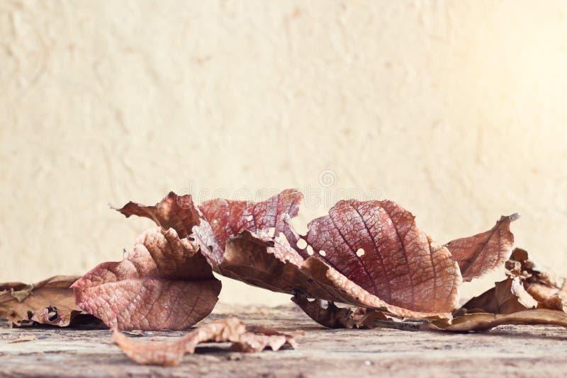 Seque as folhas em pranchas de madeira velhas imagens de stock royalty free