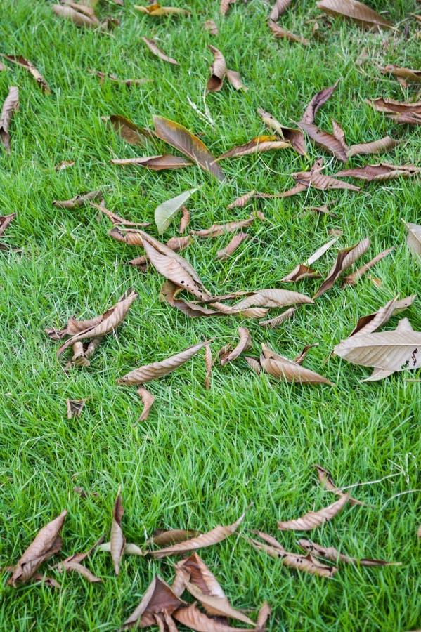 Seque as folhas na grama verde imagens de stock royalty free