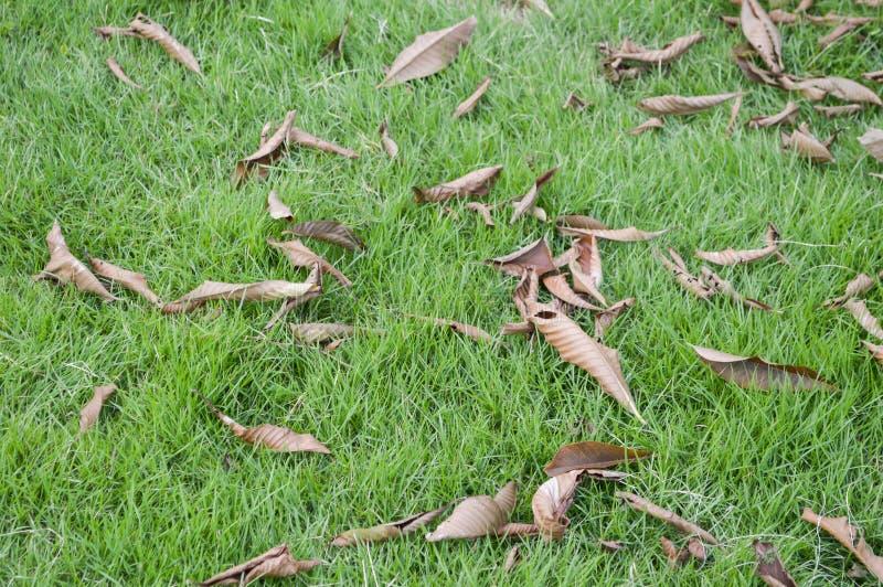 Seque as folhas na grama verde imagem de stock royalty free