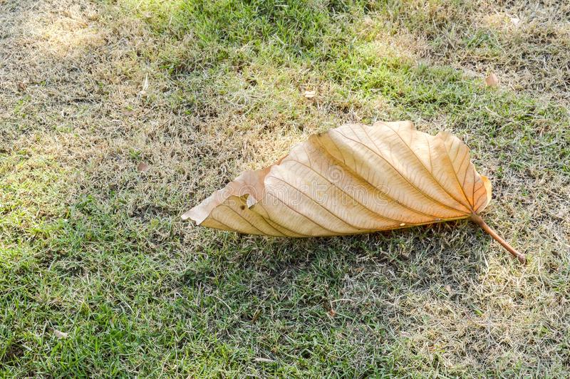 Seque as folhas na grama verde fotos de stock royalty free
